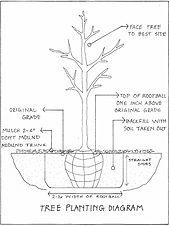 Tree Planting Diagram