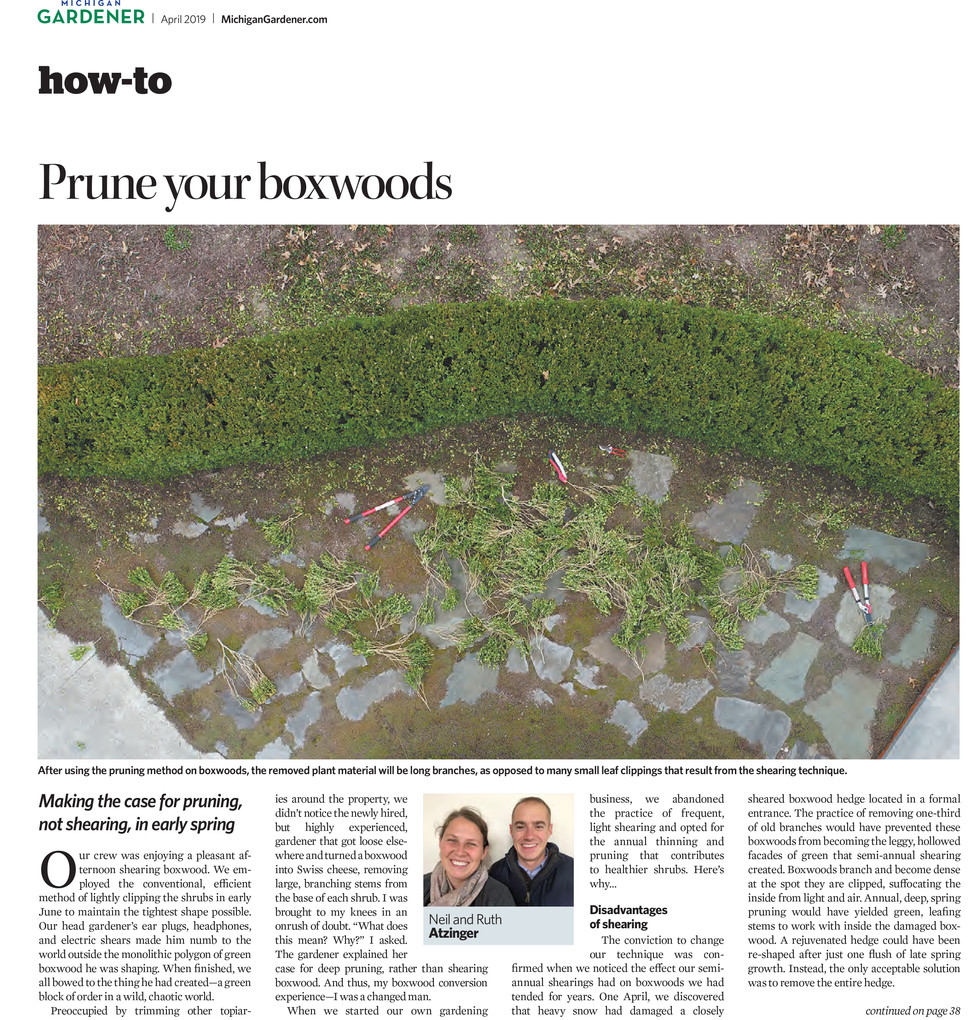 Hot Off The Press - Boxwood Care in Early Spring