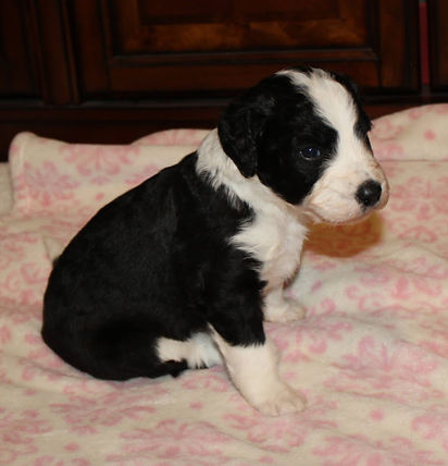 Daisy 9-9-20 3.JPG