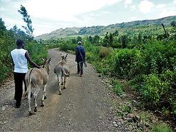 Fabrication de harnais pour les ânes