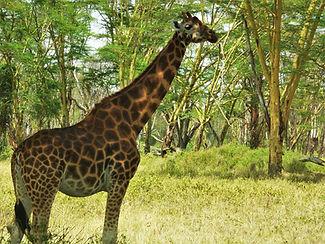 découverte de la faune sauvage africaine.