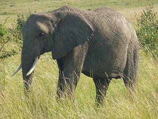 Mission auprès des animaux en Afrique