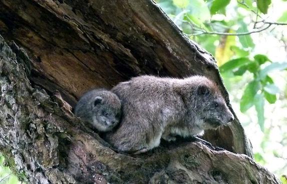 protection de la nature et des animaux kenya