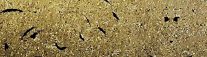 WT21 Rebrand banner 3.png