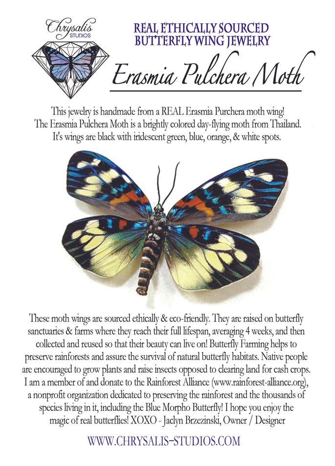 Erasmia postcard.jpg