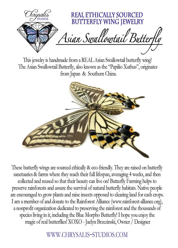Asian swallowtail postcard.jpg