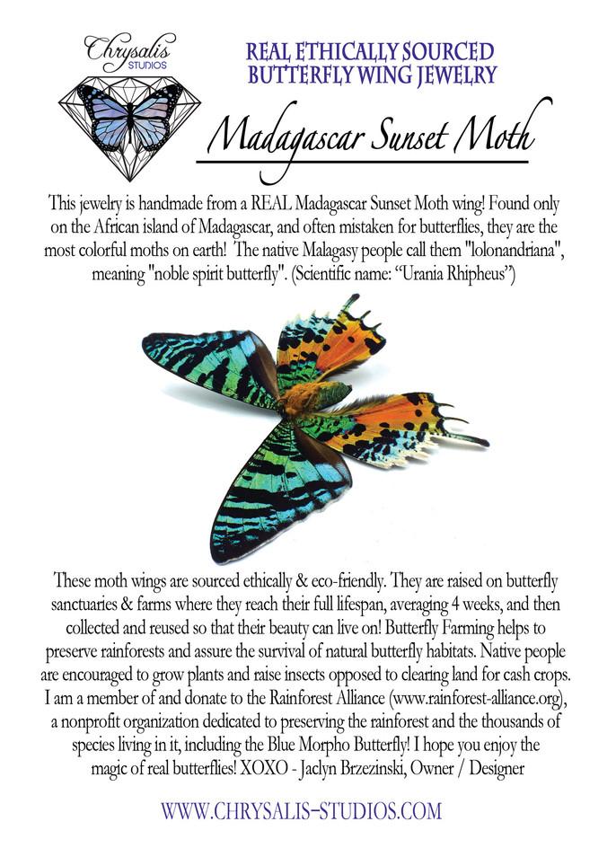 Madagascar postcard.jpg