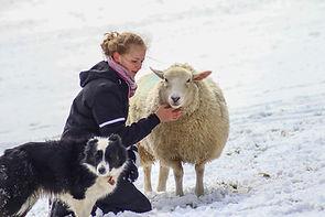 maria snow sheep sm.jpg