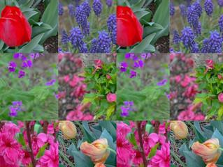 庭先では春の花たちも賑わい♡4月の庭・・・花のコラージュ♡春の疲れにヨガでアプローチ♡呼吸とイメージで溶かして流してスッキリしちゃおう♡