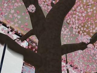古河市ヨガクラス再開♡スタバの桜ARで一足早いお花見♡