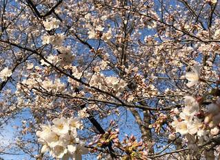 春はデトックスヨガ♡