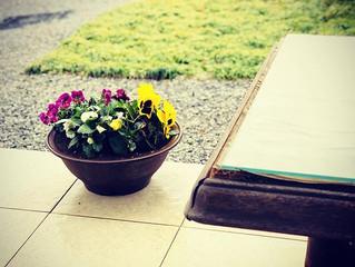春が来る♡ リラスマイルYOGA教室