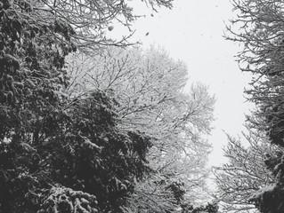 雪化粧に浮かぶ美しき相似形(フラクタル)・・・私たちも自然界の一部