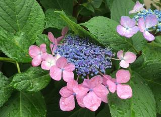 梅雨の季節は水分の代謝に気をつけたい♪~水毒を防ごう~