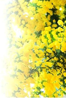 mokkoubara2_edited_edited.jpg