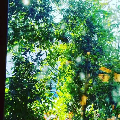 カフェの窓から♡ 一人になって頭の整理も大事ですね(*^^*)