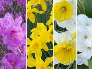 春色の花コラージュ♡季節の変わり目で乱れがちな自律神経を整えよう