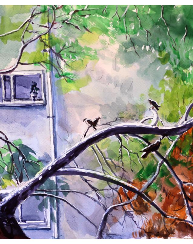 עץ האורן מול חלוני