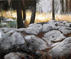 סלעים ביער צורעה