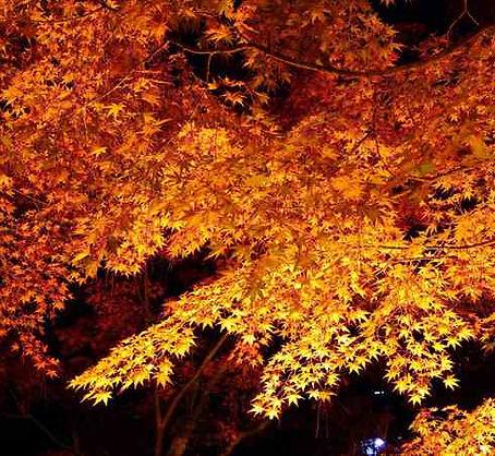 Shukkeien Garden Illumination