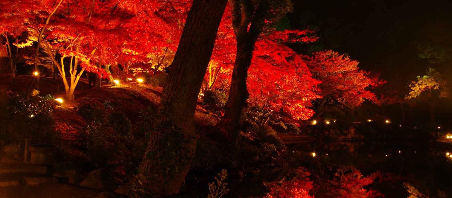 red leaves illuminaton at shukkeen