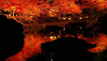 red leaves illumination at shukkeien