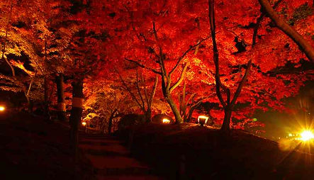 Red leaves illumination in shukkeien