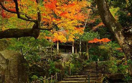 Mitaki Temple Autumn Leaves