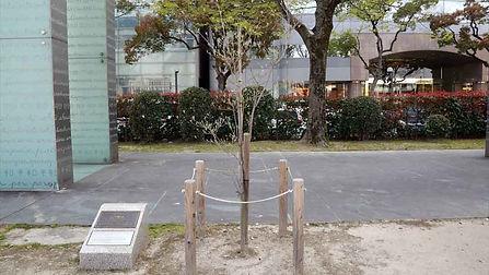 US-Japan Friend Blossom