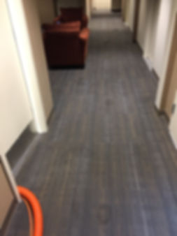 Carpet Cleaner in Tucson Arizona