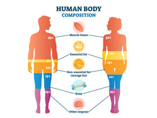 Optimal Body Composition