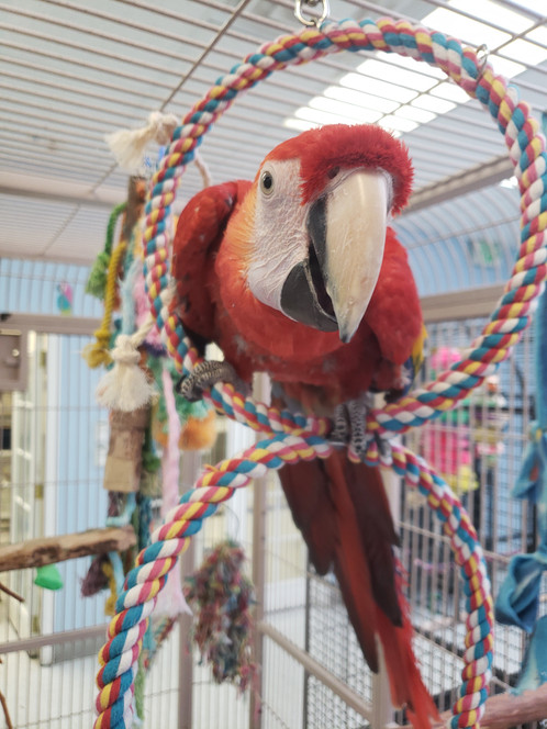 Bird shop in Colorado | Denver | Exotic Bird Emporium