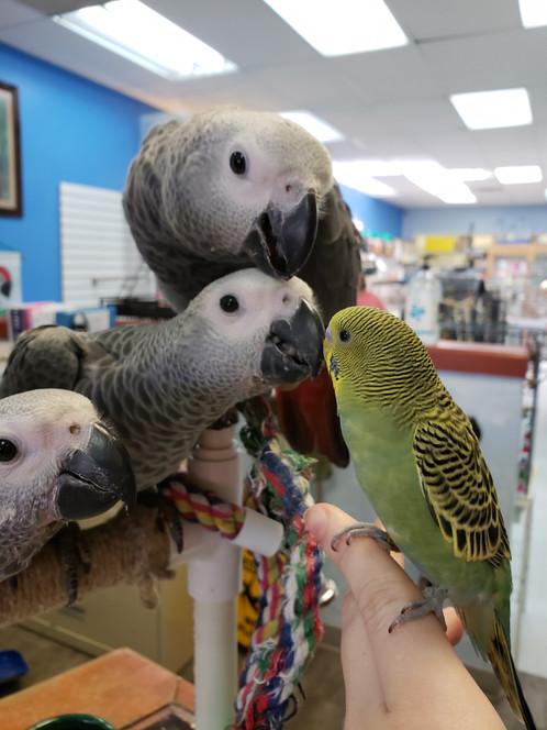 Bird shop in Colorado | Denver | Exotic Bird Emporium