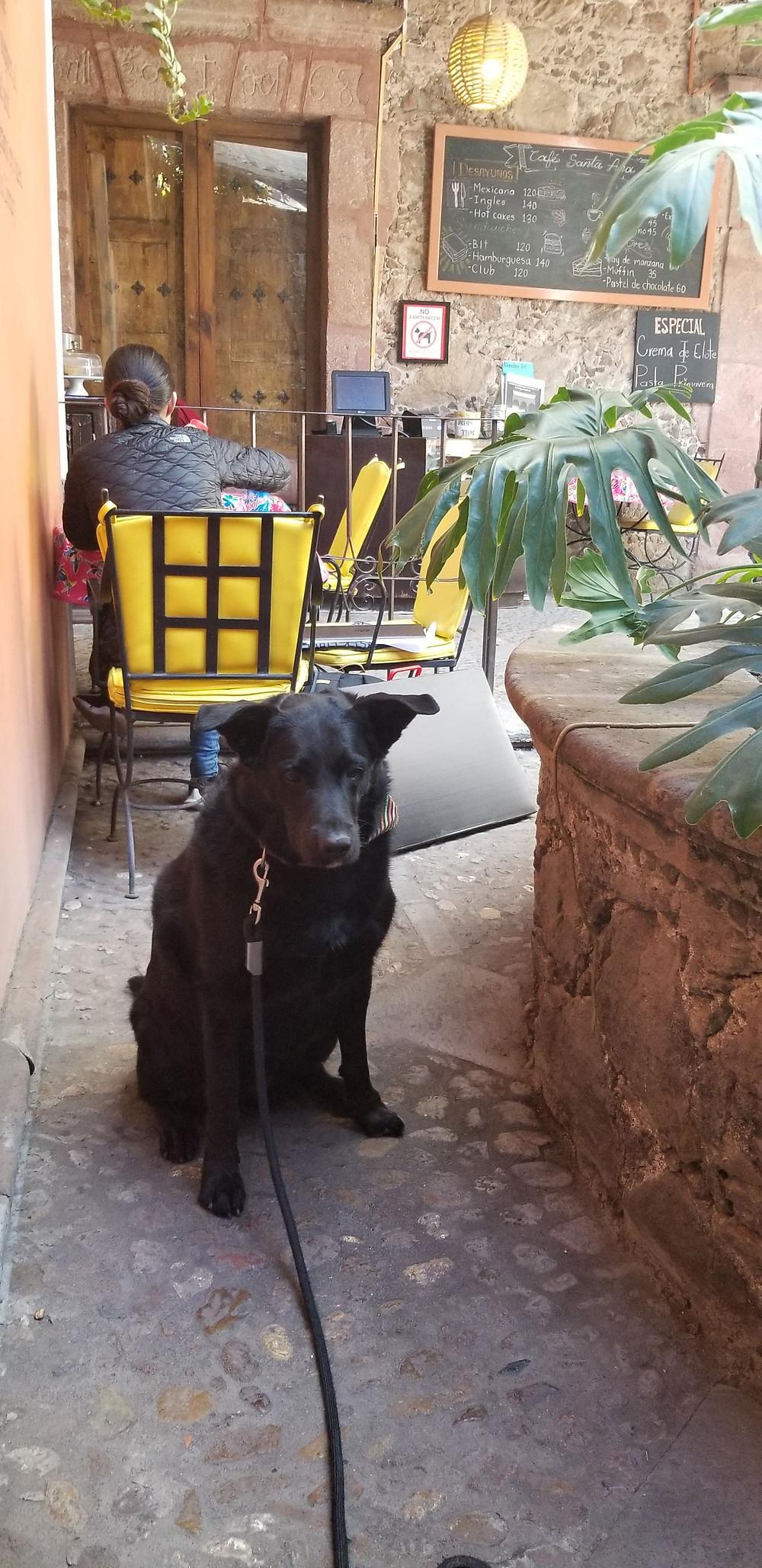 Dallas in the No Mascotas Cafe