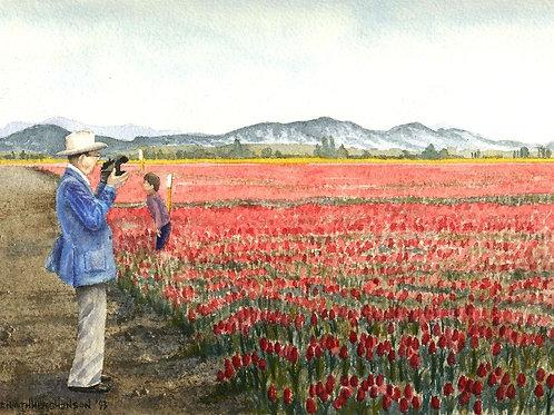 Coot Among Tulips