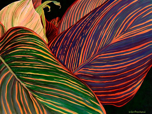 Cannas Leaves