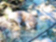 レオ_190617_0020.jpg