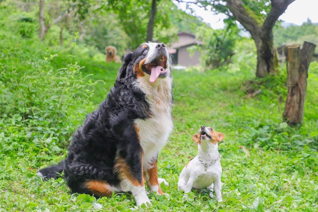Mother Garden DogRun