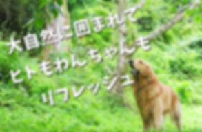 dogrun_img_02.jpg
