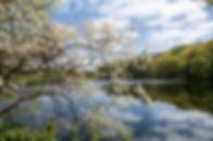 Rockefeller State Park Preserve  - New York
