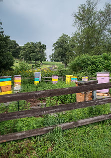 European honey bee hives at an apirary hive - (c) Copyright 2018 Paula Sharp