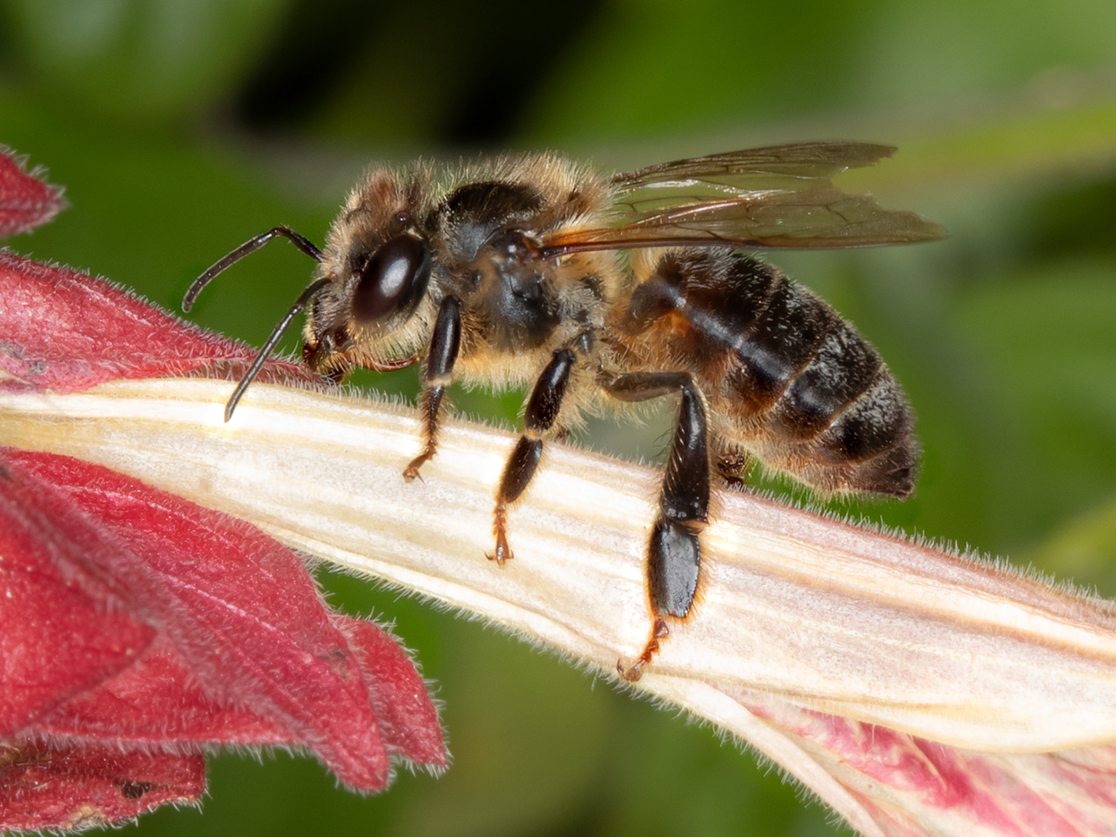 WJPEG-Honey-Bee-Black-CROP-FLA-#16-Wash-