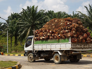 Palm Oil: Progress or a Pitfall for Latin America?