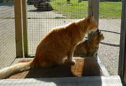 cat_boarding_3.jpg
