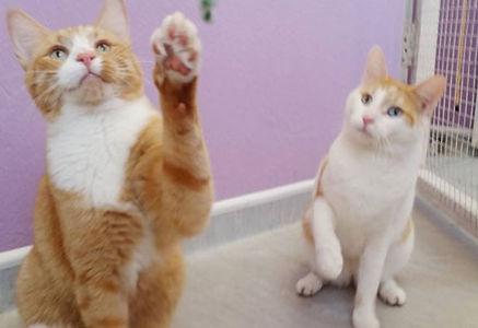 cat_boarding_1.jpg