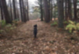 dog_boarding_3.jpg