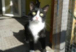 cat_boarding_2.jpg