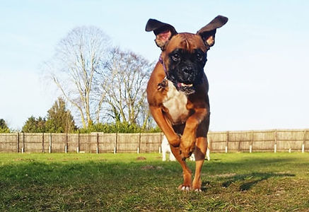 dog_boarding_1.jpg