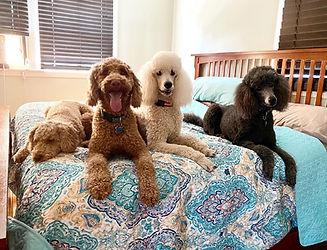 Overnight pups.jpg