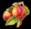 Peach03.png